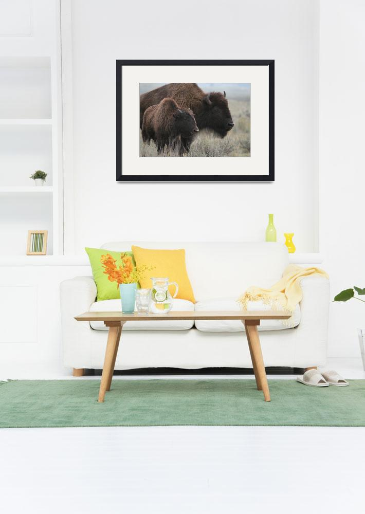 """""""American Bison & calf - Yellowstone&quot  by vish"""