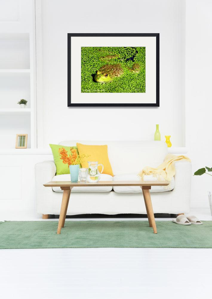 """""""Frog in Pond&quot  (2016) by zenlady"""