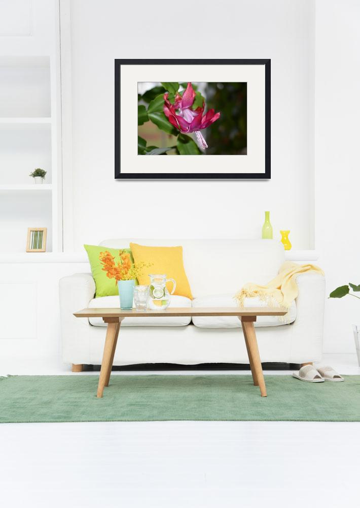 """""""Red Christmas Cactus Flower&quot  (2017) by FrankD0024"""