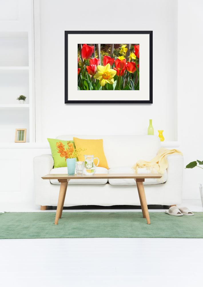 """""""Spring Daffodils Flowers art prints Red Tulips""""  (2014) by BasleeTroutman"""