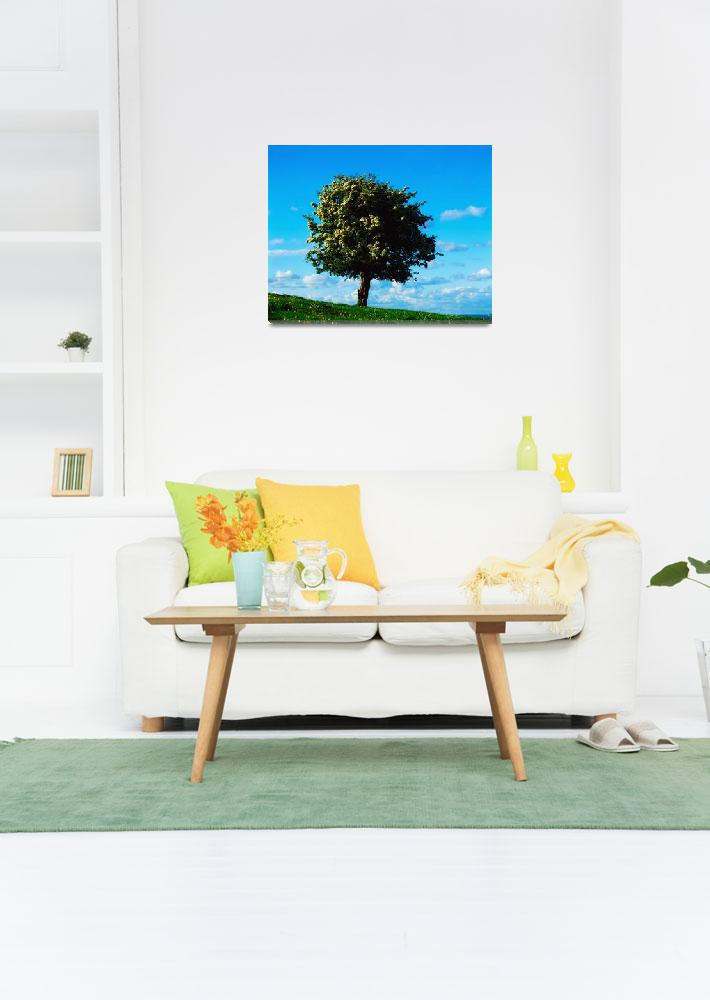 """White Hawthorn Tree&quot  by DesignPics"