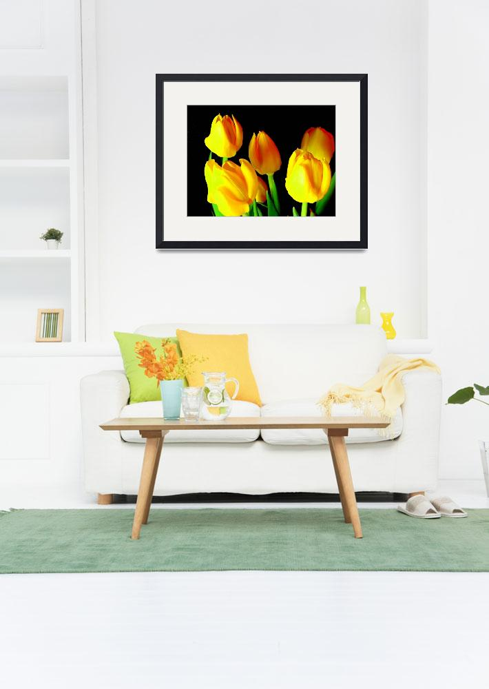 """Yellow Tulips&quot  by maj"