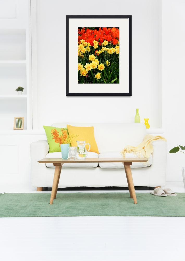 """""""Daffodils and Tulips&quot  (2009) by rayjacque"""