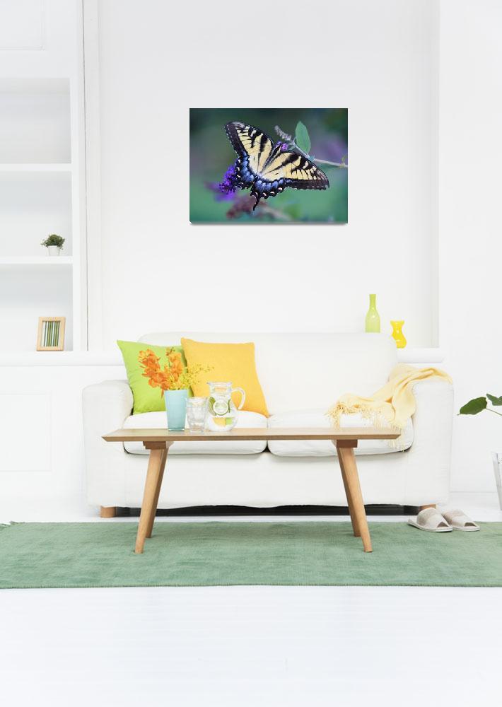 """""""Eastern Tiger Swallowtail Butterfly""""  (2013) by KsWorldArt"""