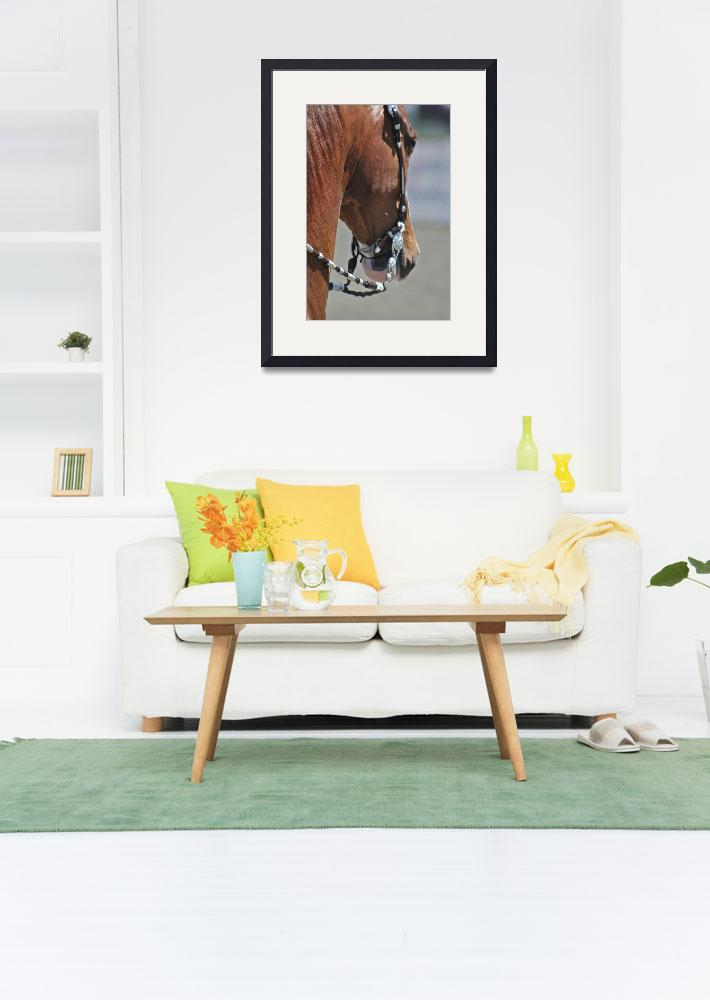 """""""UPHA Chapter One Horse Show&quot  (2009) by judyrsi"""