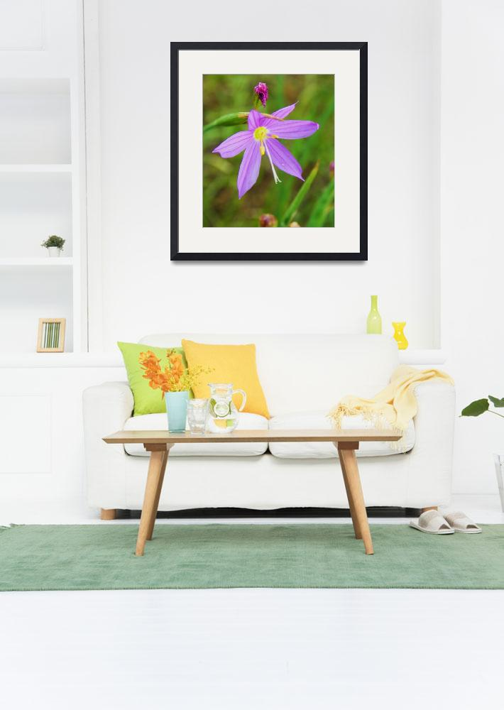 """""""Botanical - Spring Beauty - Outdoors Floral&quot  by artsandi"""