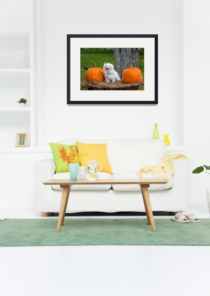 """""""White Maltese Dog in Wheelbarrow with Pumpkins&quot  (2017) by MotherNature1"""
