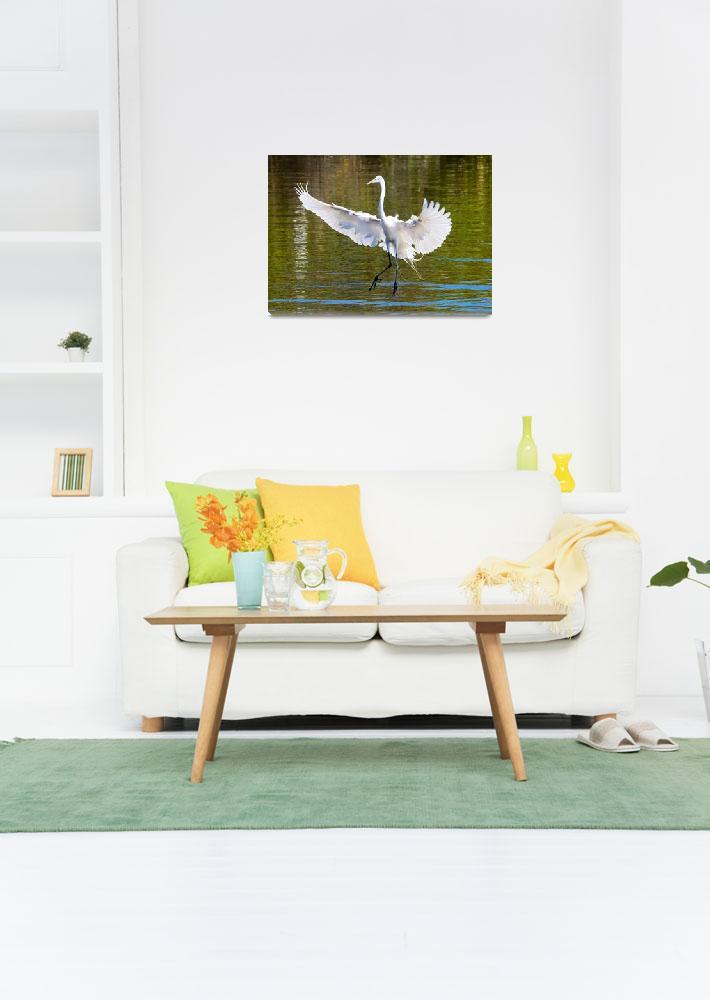 """Great Egret Landing""  by Groecar"