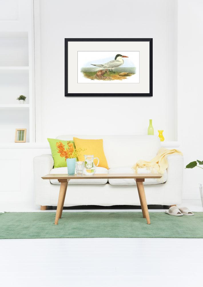 """Royal Tern Bird Audubon Print&quot  by ArtLoversOnline"