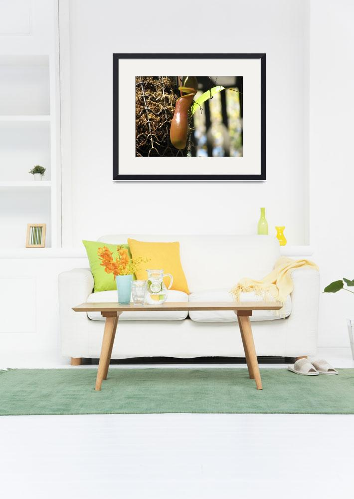 """""""Tropical Pitcher Plant&quot  by mamitascreations"""
