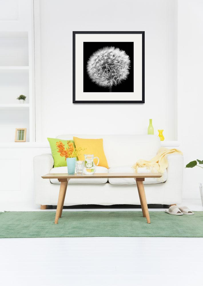 """""""Dandelion Fireworks&quot  by laurazphotography"""