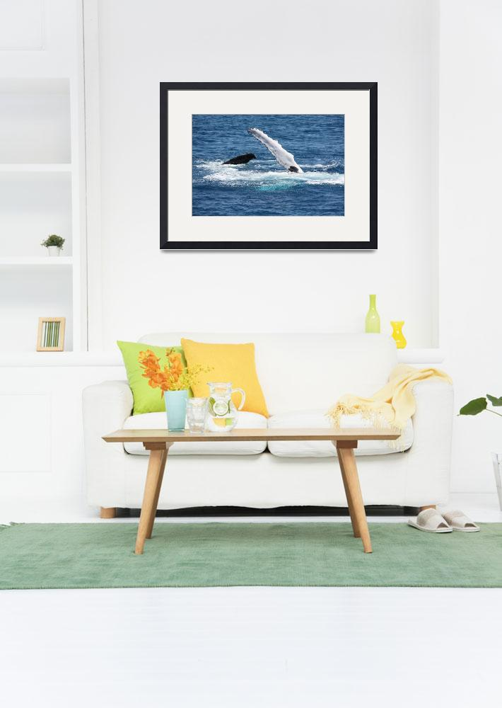 """""""NaP_ Whale Watching130&quot  by nevilleprosser"""