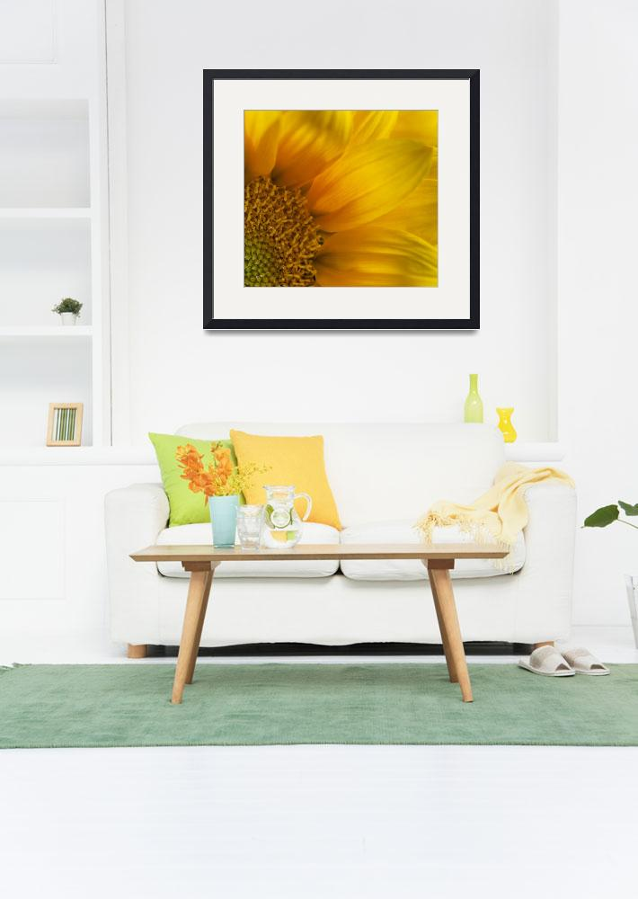 """""""Sun-Drenched Sunflower""""  (2014) by SoulfulPhotos"""