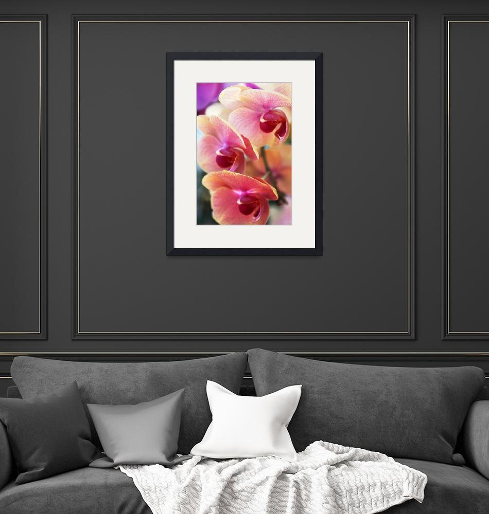 """""""Orchid Trio""""  (2016) by JessicaJenney"""