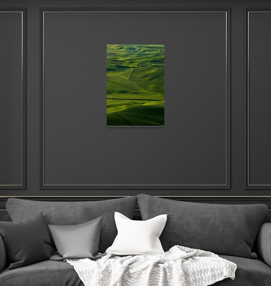 """""""Within a Sea of Green""""  (2011) by Dawsonimages"""