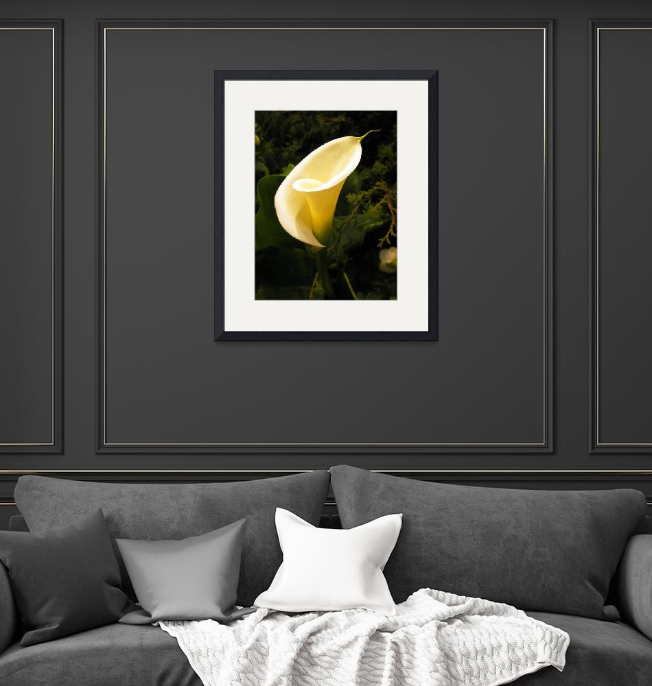 """""""Calla Lily""""  (2007) by mikepdx"""