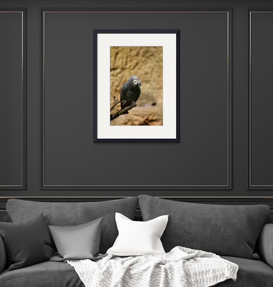 """""""Grey African Parrot""""  by mellting"""