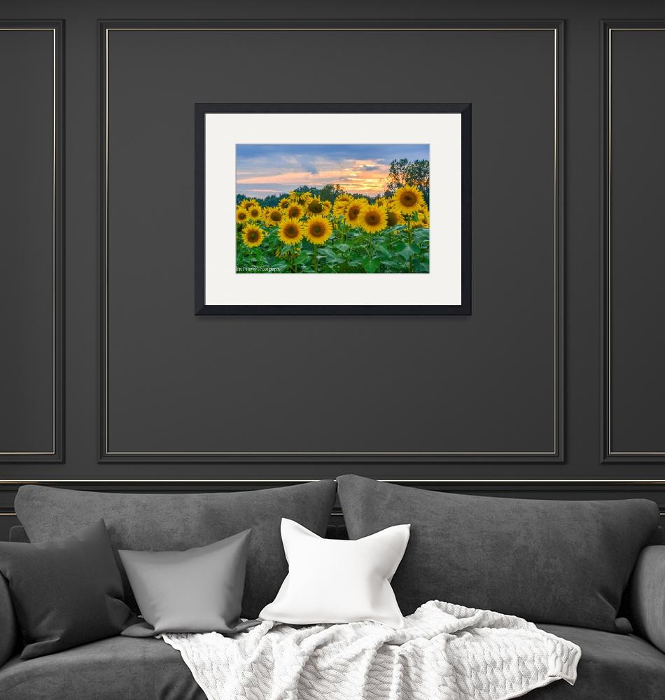 """Sunflowers at Sunset""  (2017) by Fitforeverphotography"