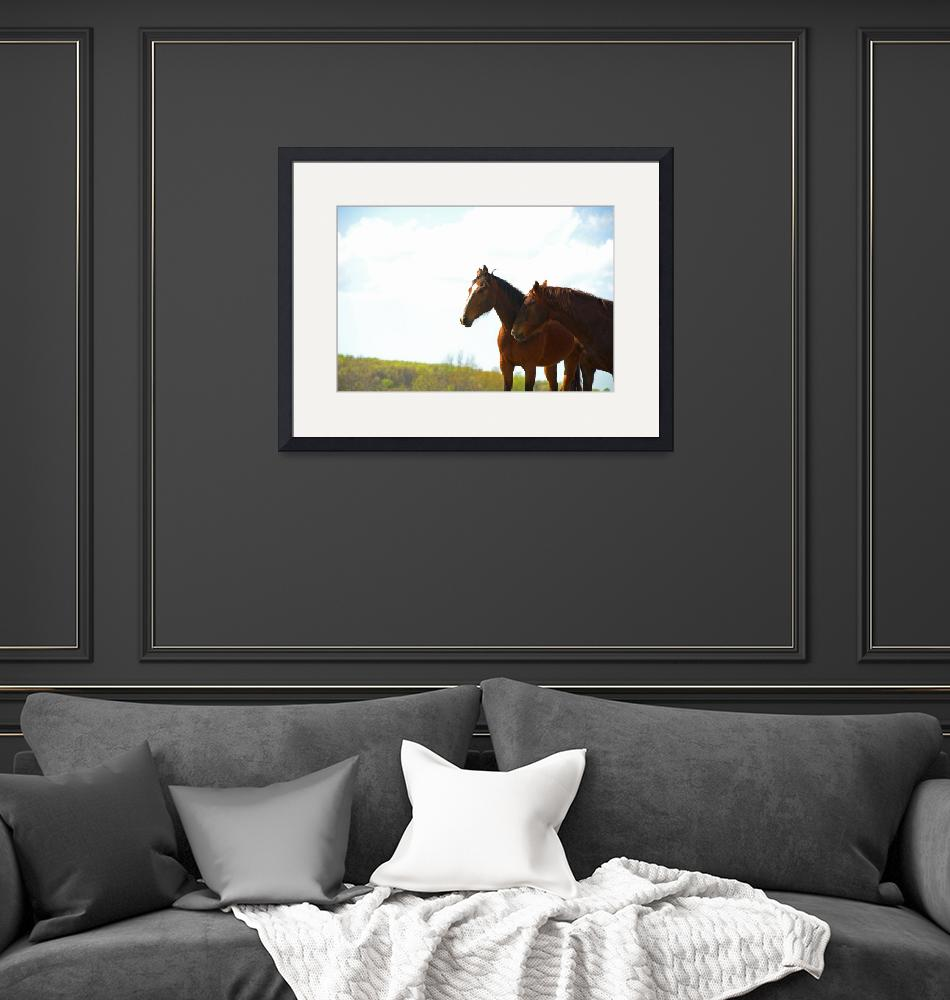 """""""horses""""  by tricia"""