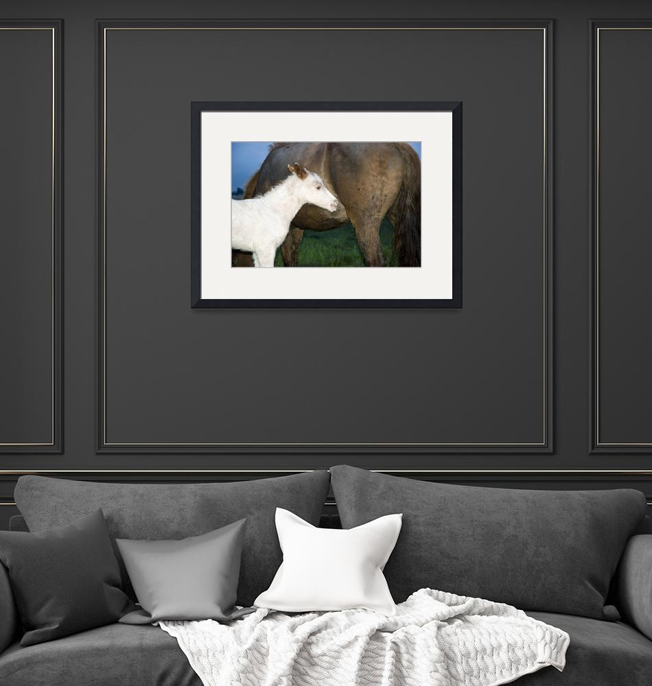"""""""White foal with mother""""  (2010) by andrewaj"""