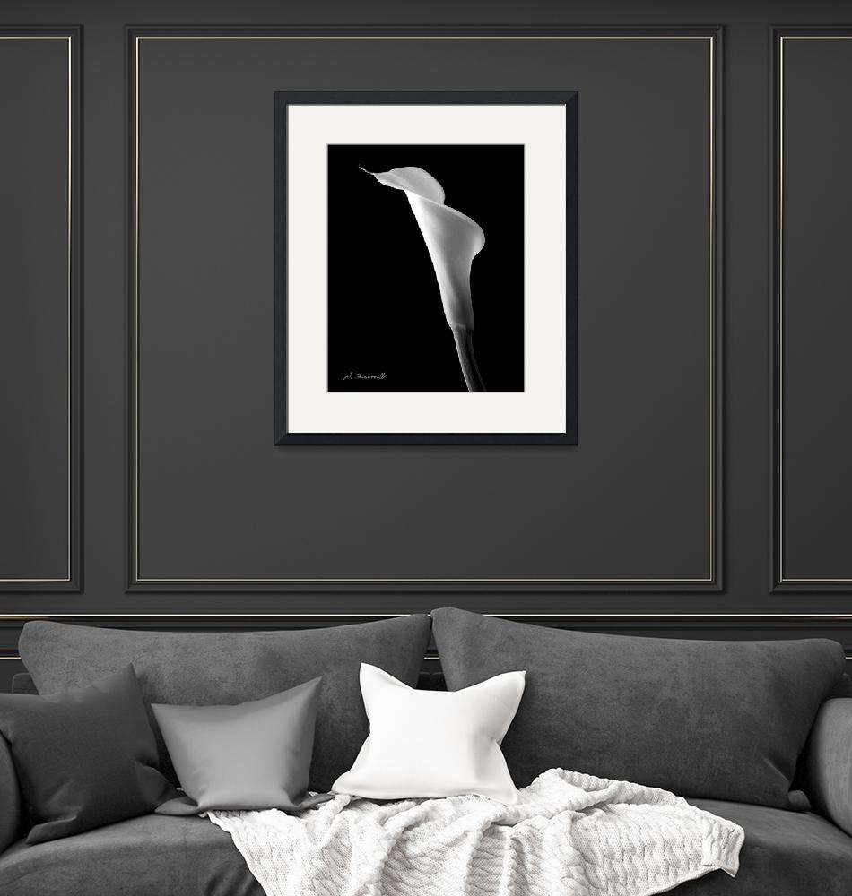 """""""Calla Flower 3""""  (2003) by LightSourceFineArt"""