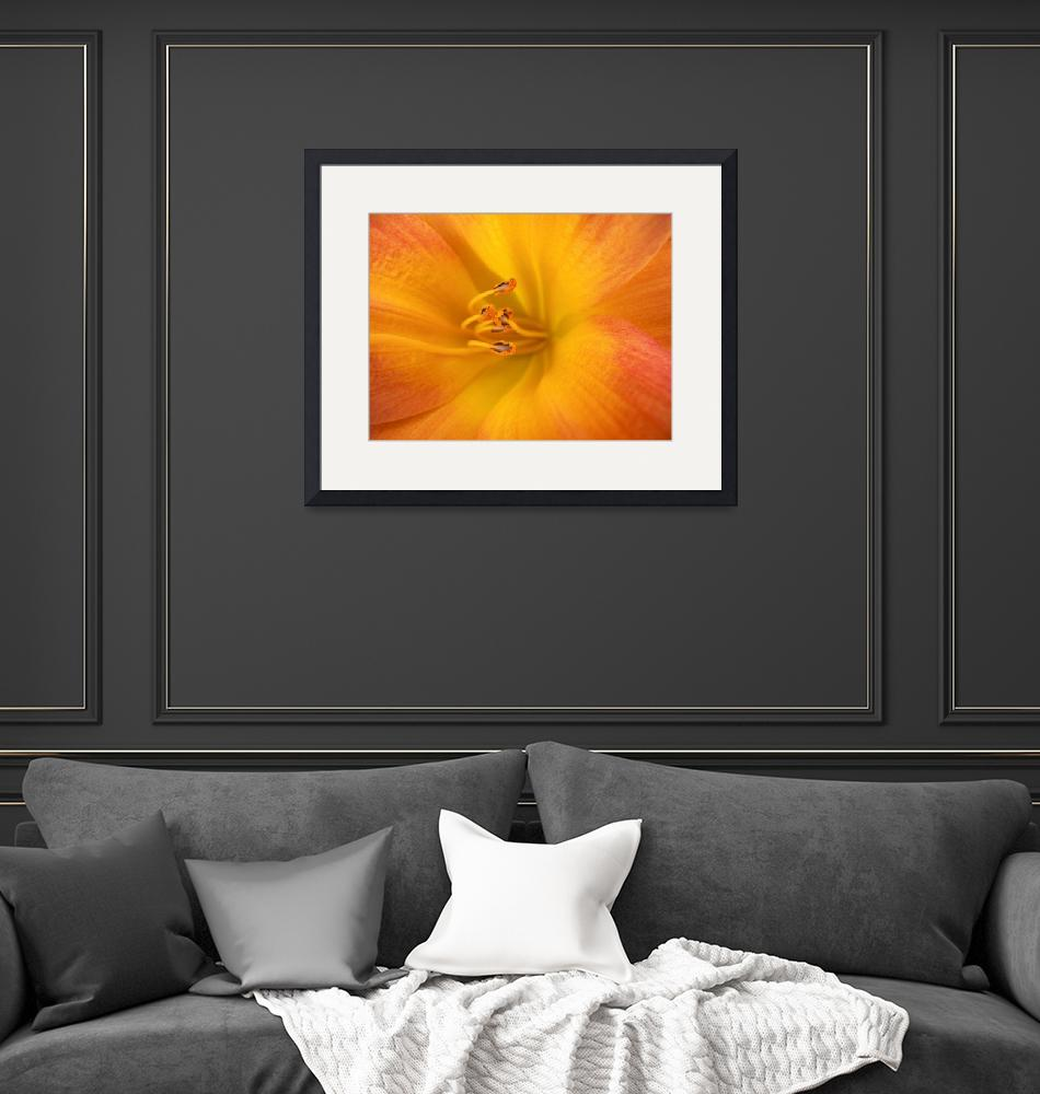 """""""Yellow Day Lily, Close Up_1765""""  (2005) by AmbientCreations"""