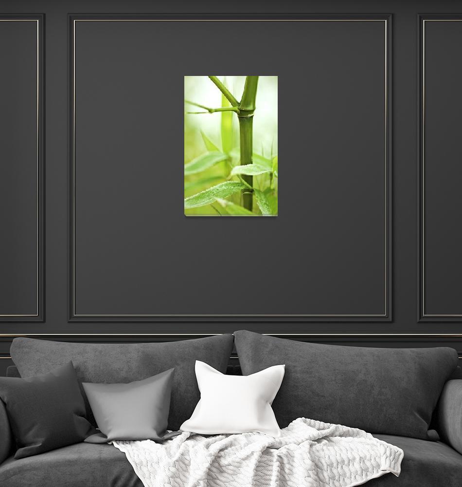 """Bamboo""  (2011) by gabii40"