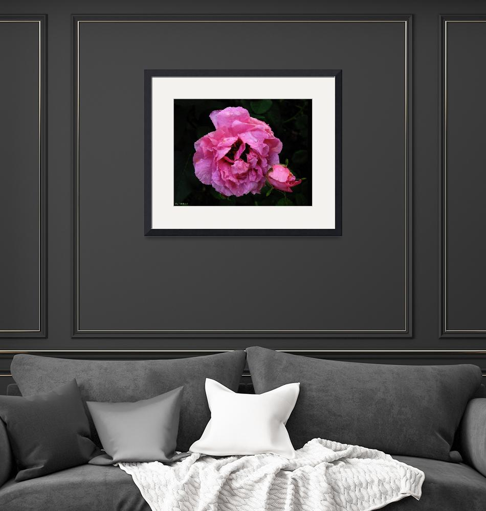 """""""Pink Rose With Bud""""  by TheCandidImage"""