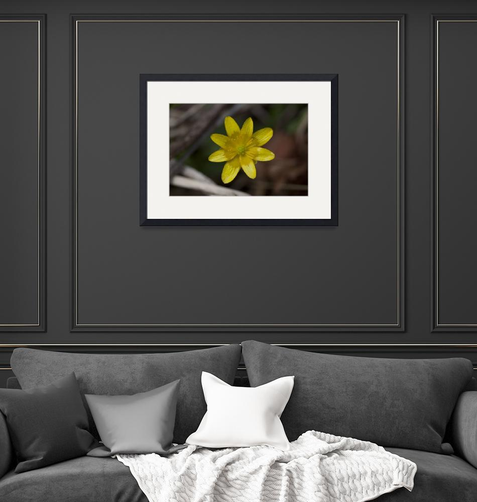 """""""Yellow Flower"""" (2011) by jeffgriffin"""