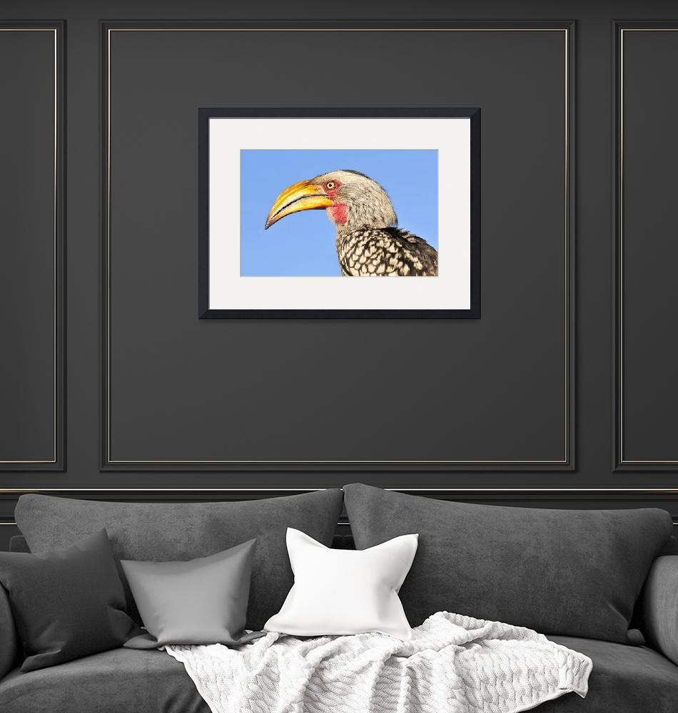 """WCC_1900- Yellow-billed Hornbill Portrait""  (2015) by photocell"