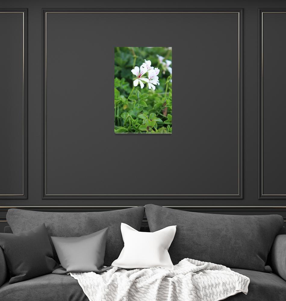 """Flowers Beauty""  (2009) by ShaelenesPhotography"