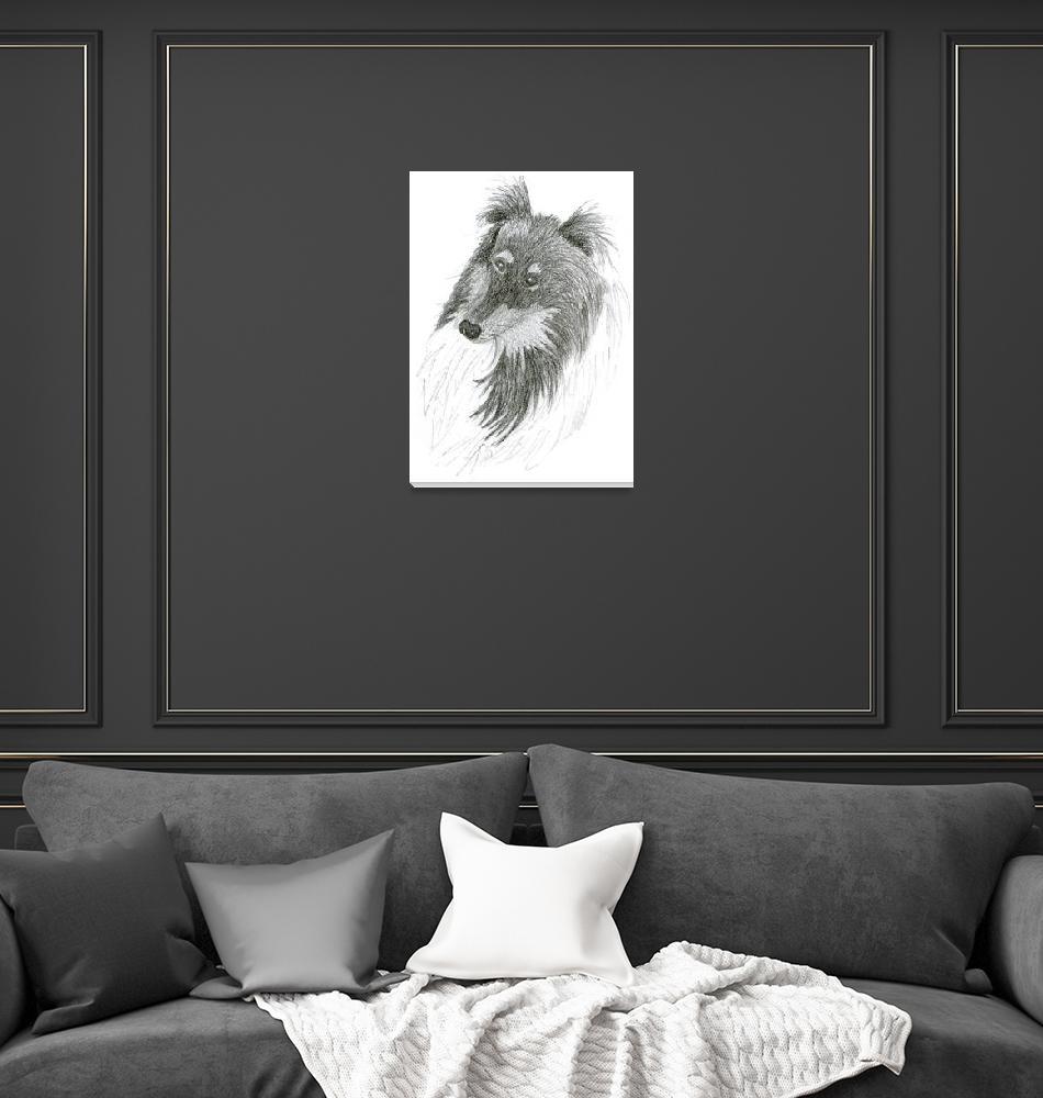 """Black Lassie, Collie Sketch""  (2011) by janemcdougall"