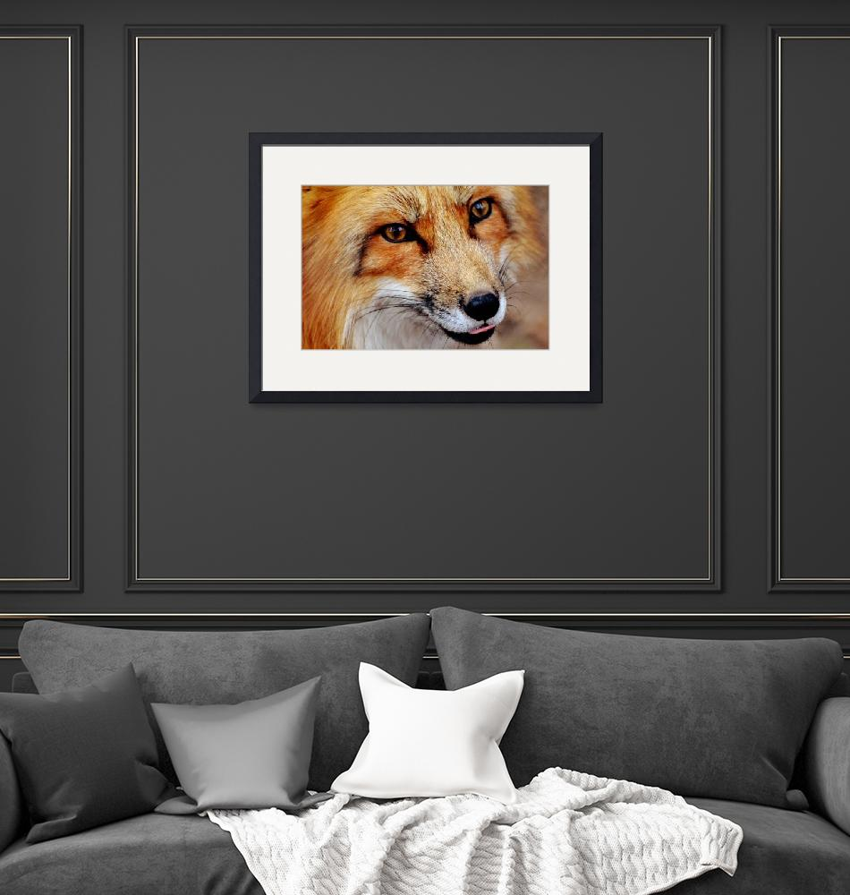 """""""Red Fox Wildlife Portrait - Rogue Art""""  (2017) by rogueart"""