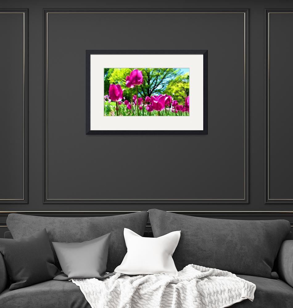 """""""Luminous Purple Tulip Blooms in Spring Flower Bed""""  by Chantal"""