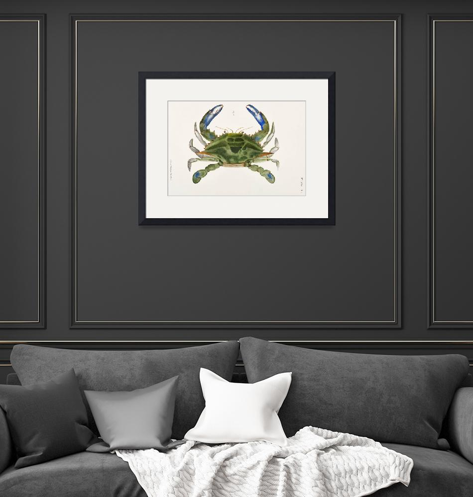 """Blue crab (Lupa decanta) Illustration""  by FineArtClassics"