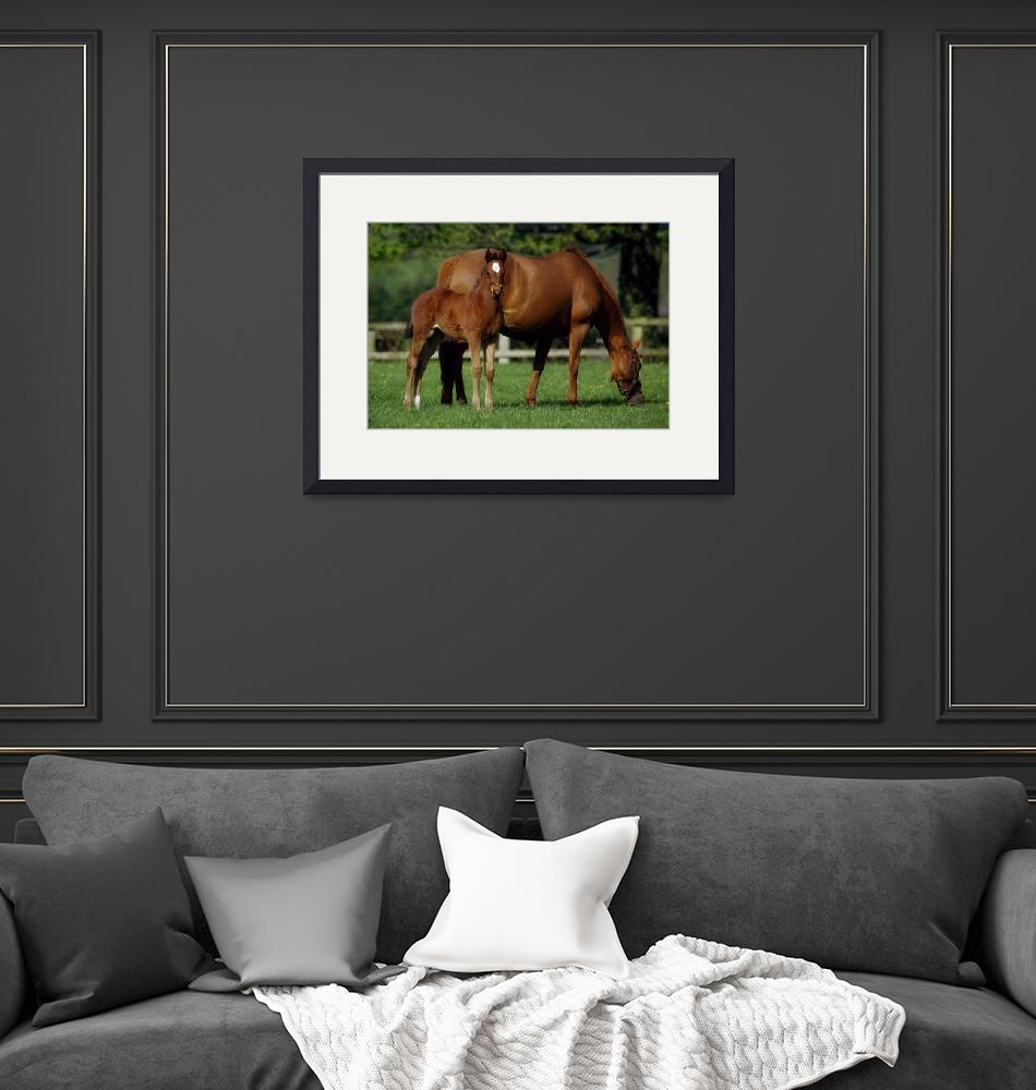 """Thoroughbreds Mare"" by DesignPics"