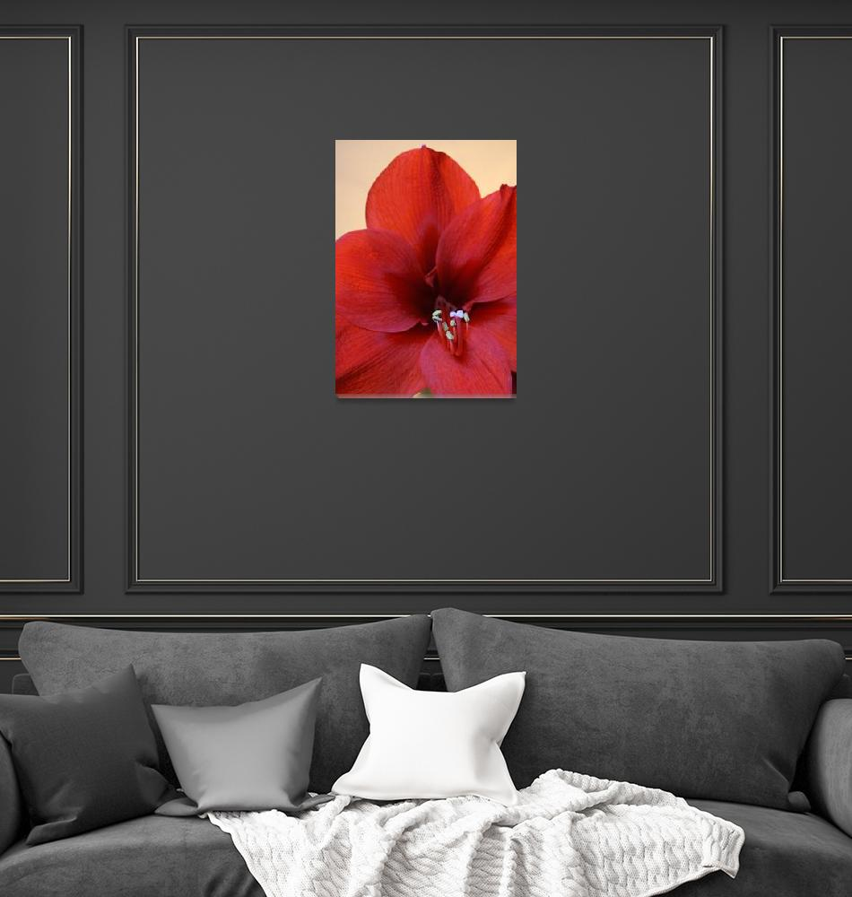 """Red Flower""  (2012) by feophotos"