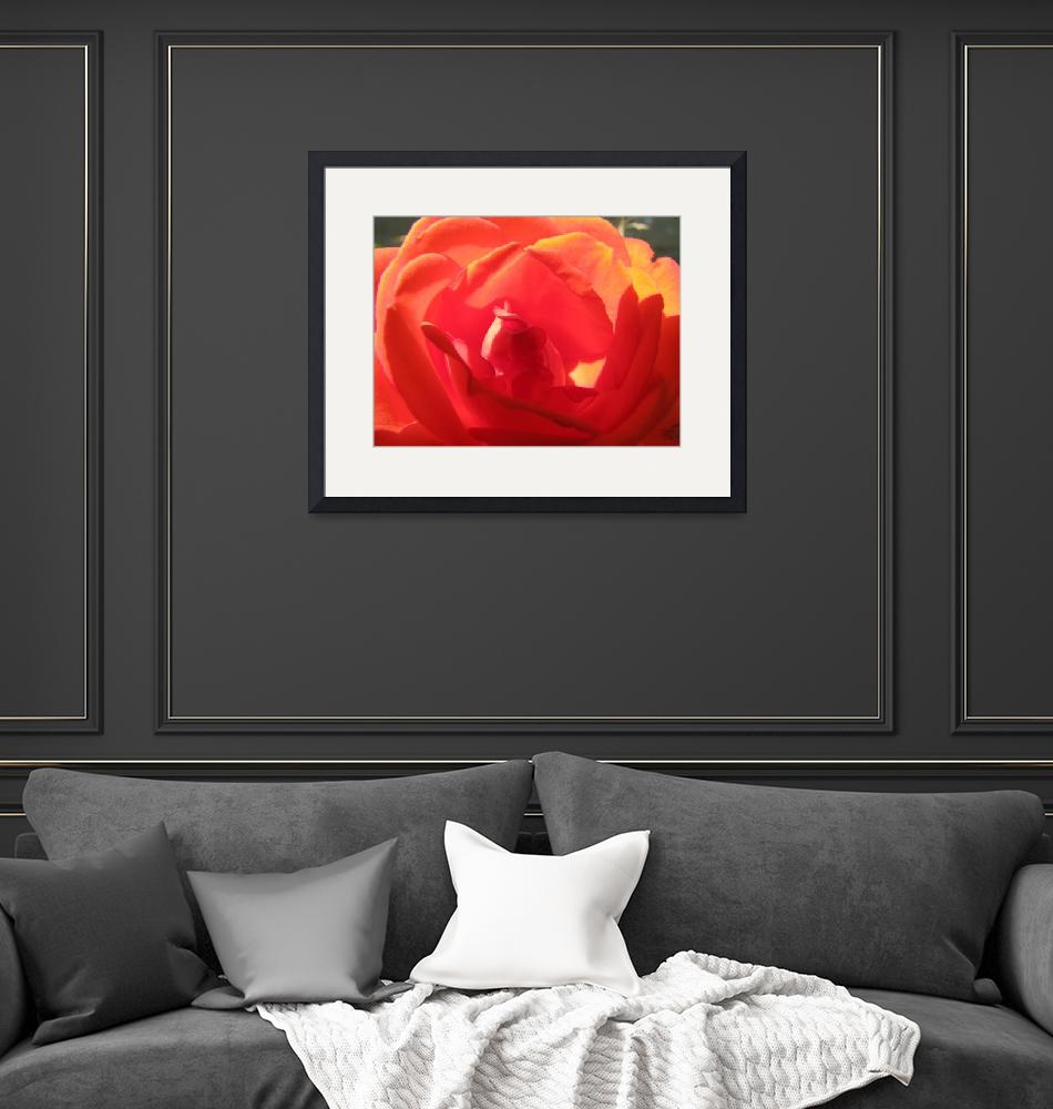 """""""Roses are red"""" (2008) by flashesofnature"""