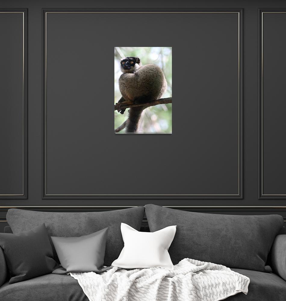"""Pensive Brown Lemur""  (2009) by janemcdougall"