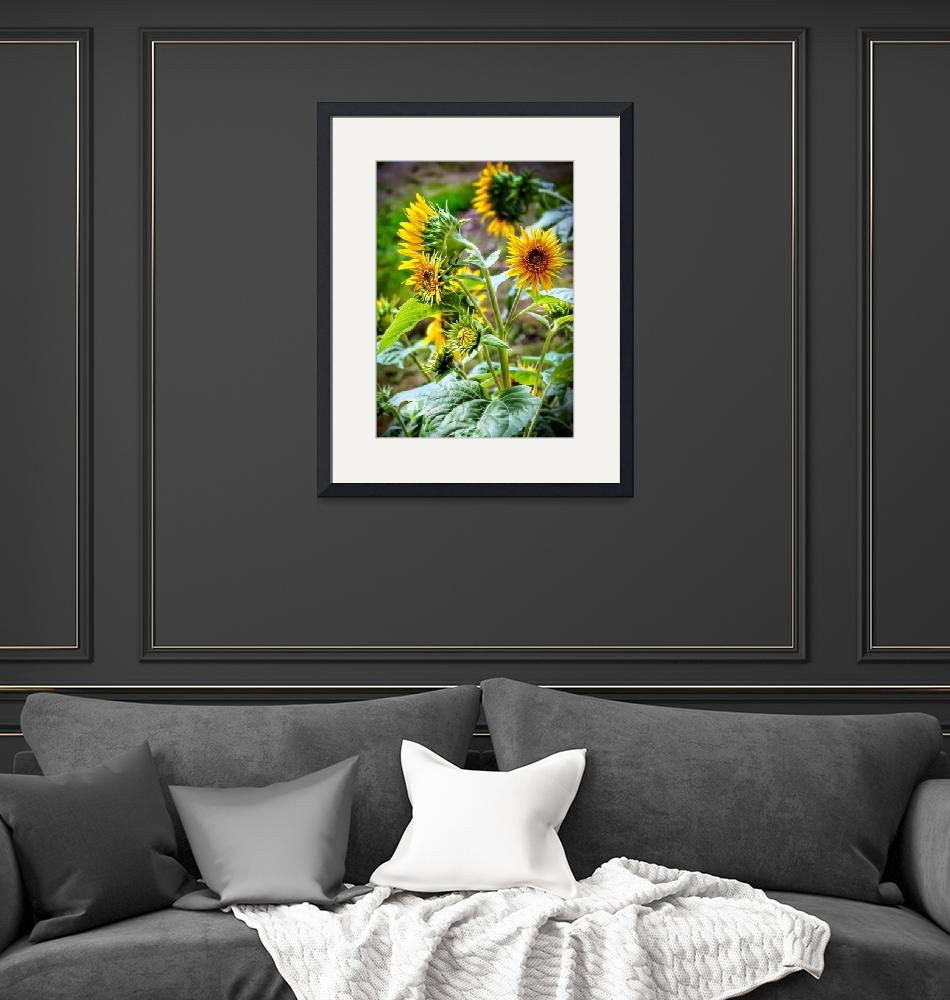 """""""Sunflowers From All Sides""""  (2020) by raBHA2014"""