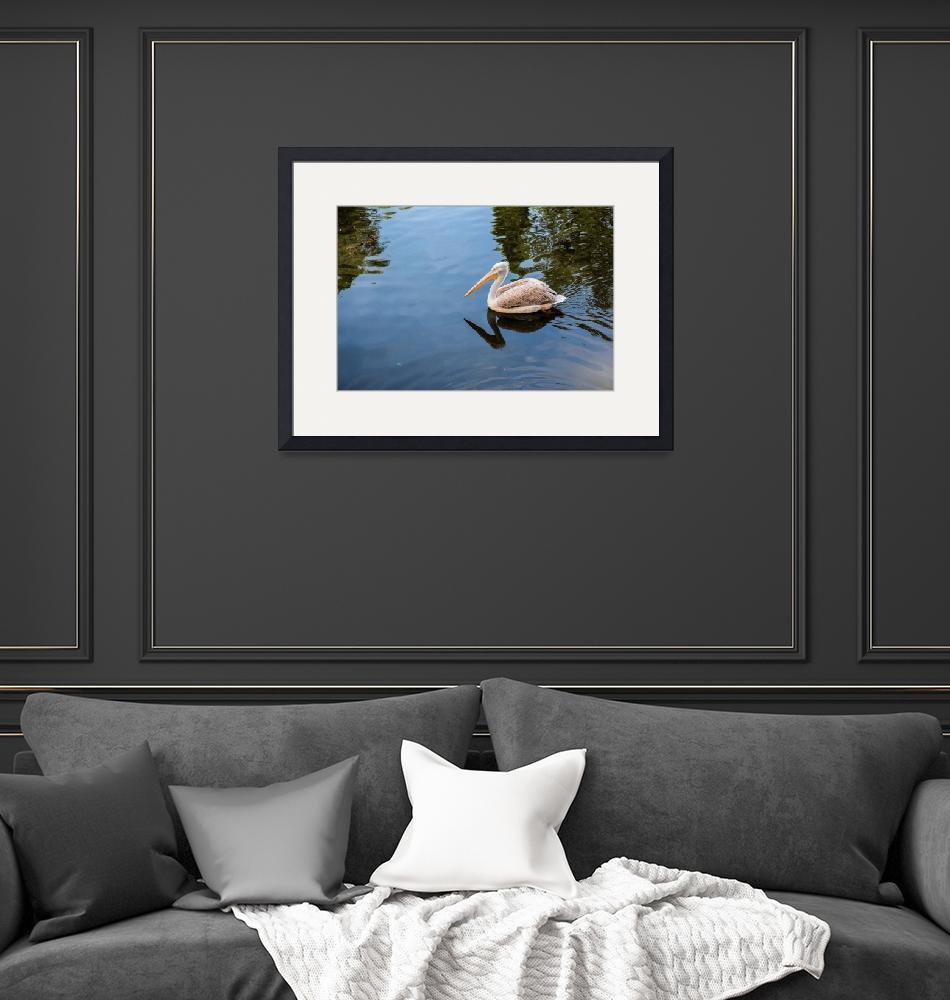 """""""Pelican floating in the lake""""  by maor-winetrob"""