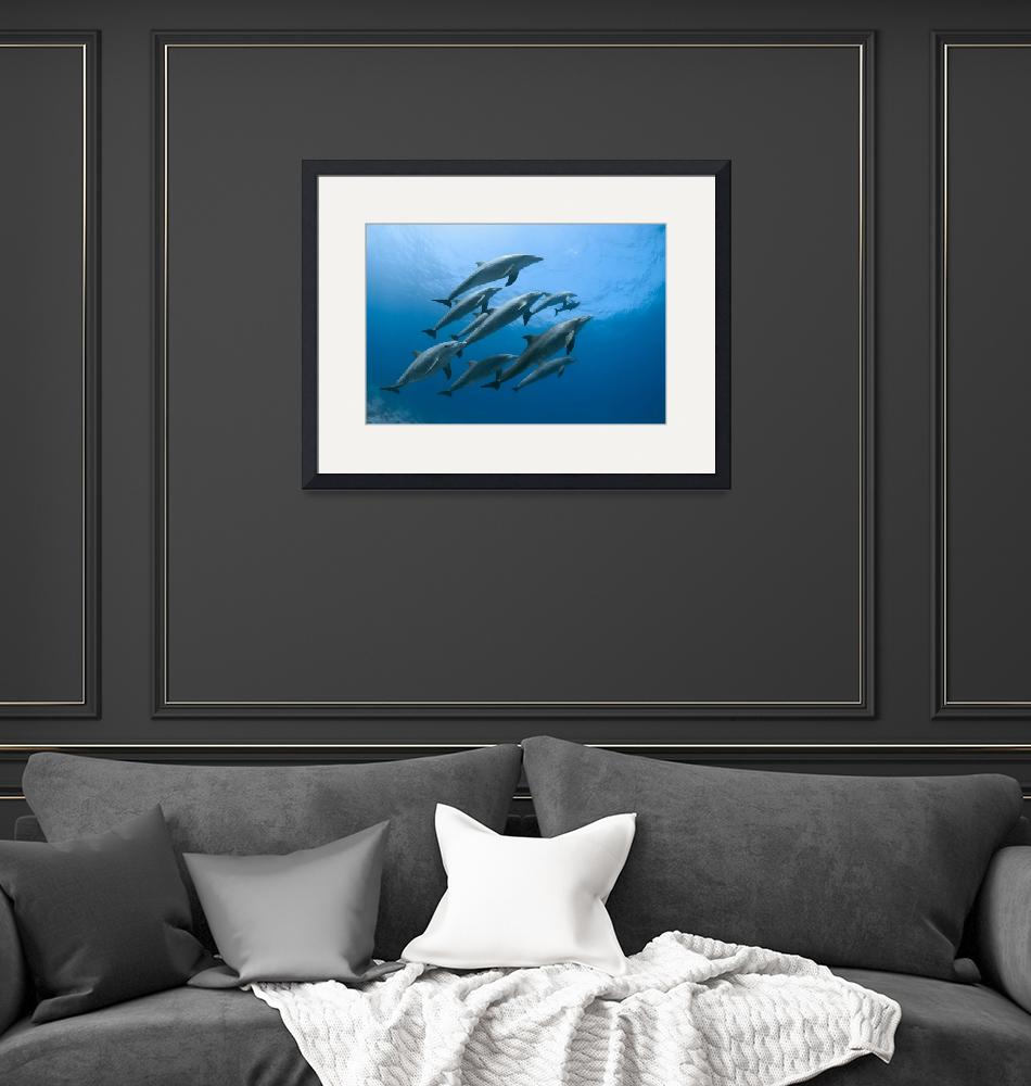 """""""Dolphin Family Asleep (Large)""""  (2011) by DiveWonders"""