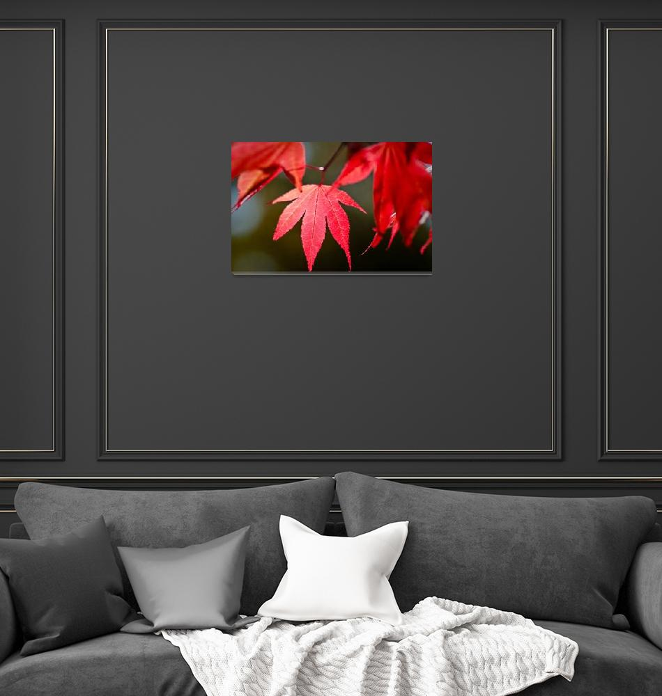 """""""Red Leaf"""" by ReflectPhotography"""