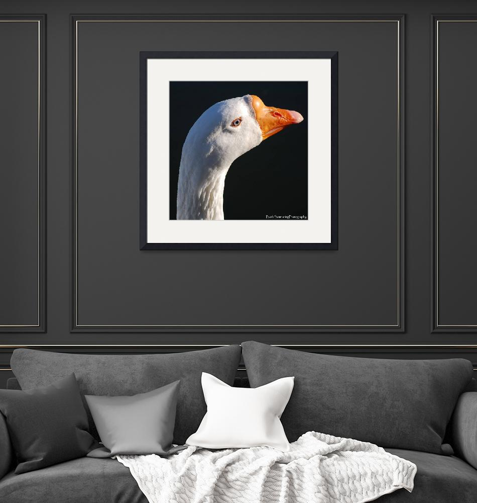 """GOOSE with blue eyes""  (2008) by barbsummering"