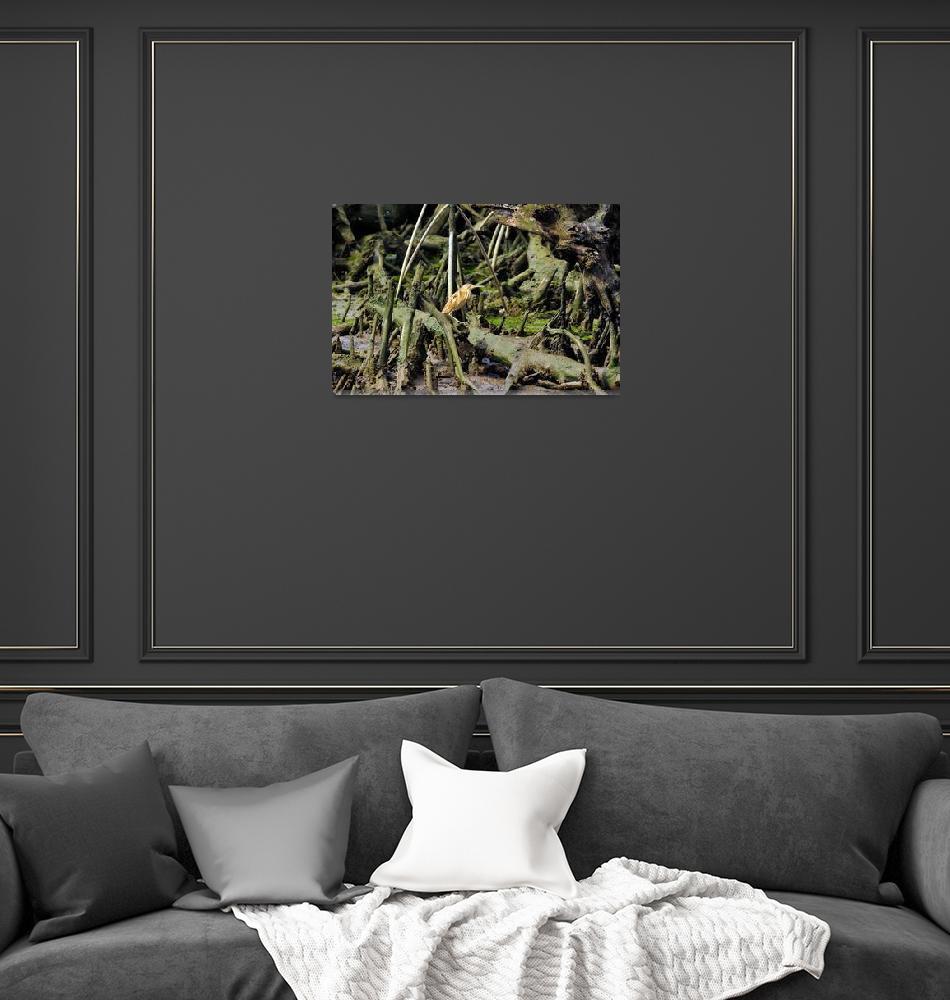 """""""Heron In Spooky Mangrove Woods""""  (2015) by JoaoPonces"""
