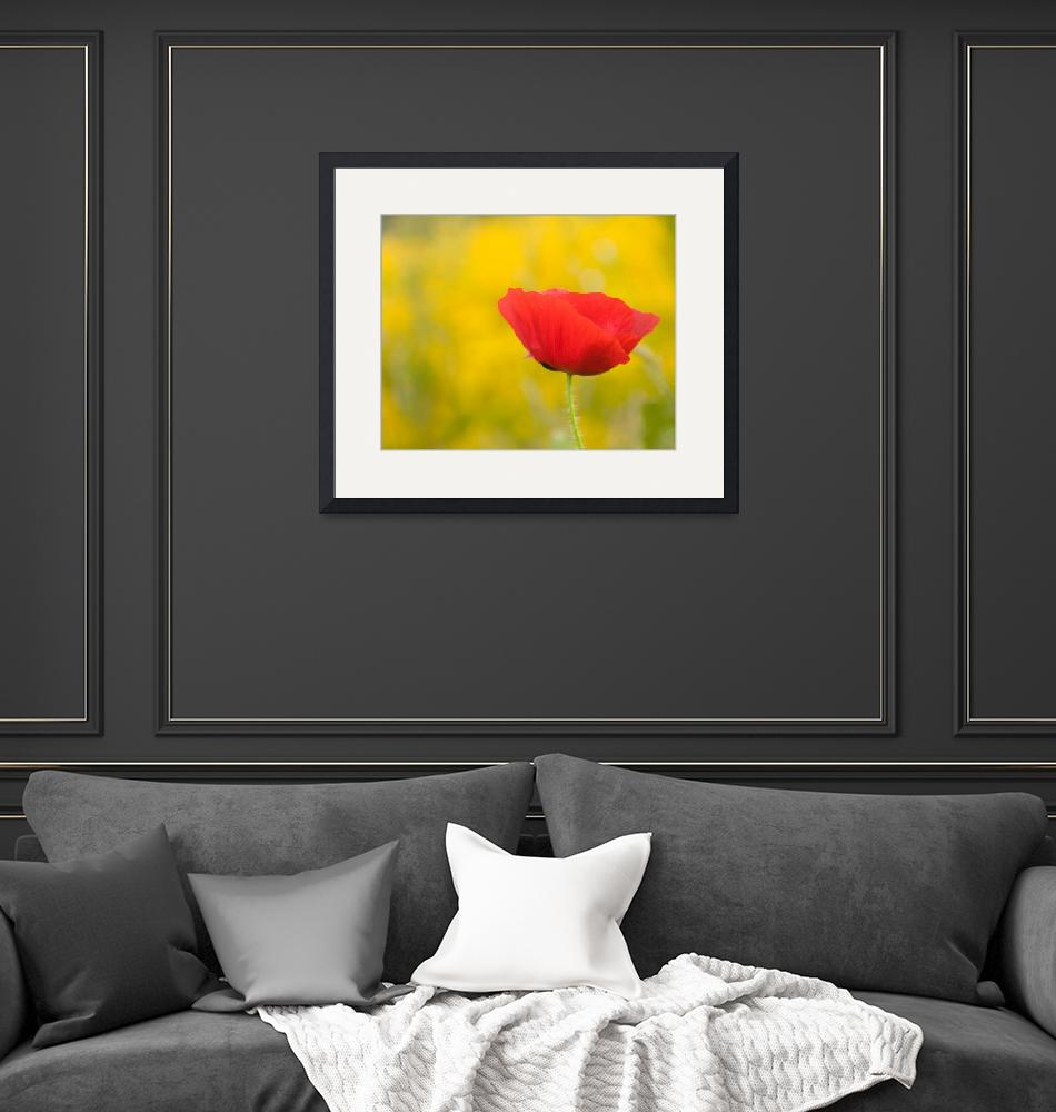 """Red poppy""  (2008) by OGphoto"