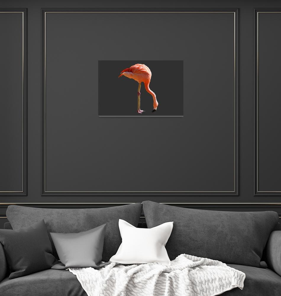 """Pink Flamingo""  (2012) by kenrainwaterphotography"