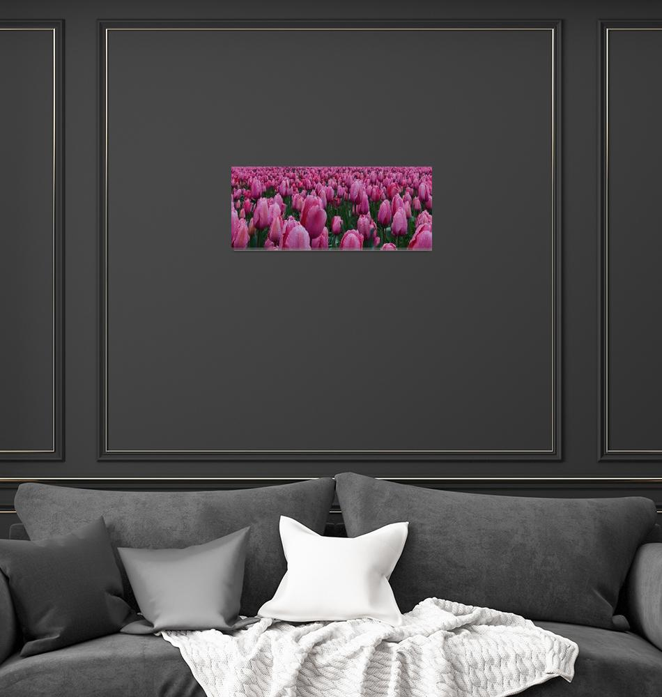 """""""Pink Tulips""""  (2014) by boppintheblues"""