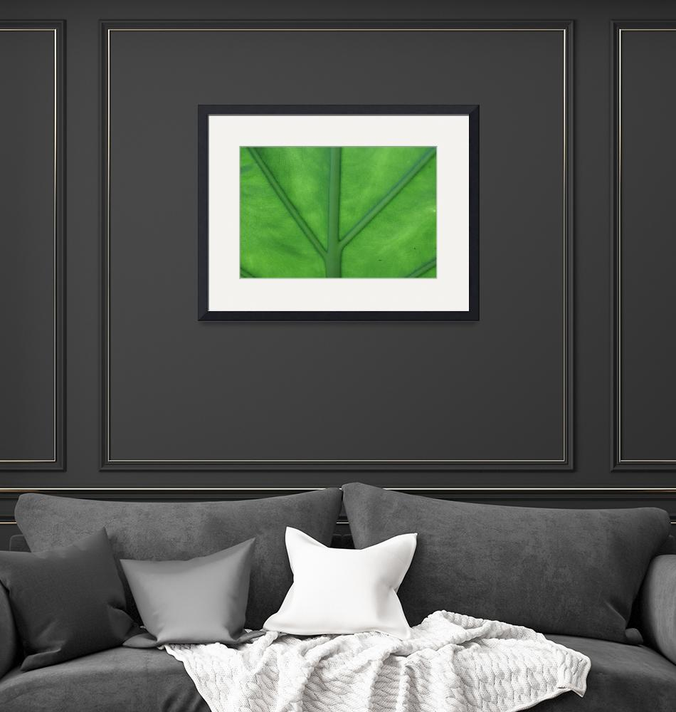 """Green Veined Leaf""  (2008) by ritzema"