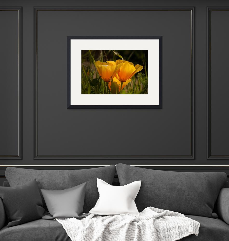 """""""Poppies Point Reyes""""  (2010) by SederquistPhotography"""